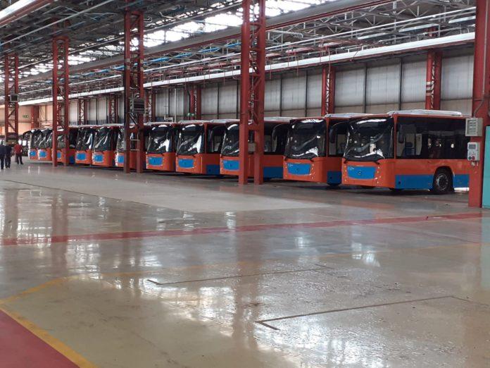 nuovi bus anm